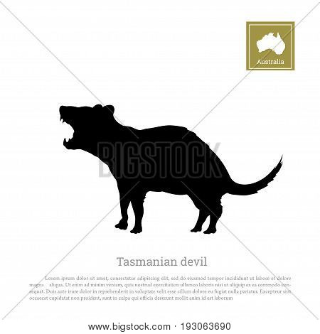 Black silhouette of  tasmanian devil on white background. Animals of Australia. Vector illustration