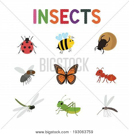 Funny insects, cute cartoon bugs vector set. Colored insects bee butterfly and ladybird, collection of cute insects.