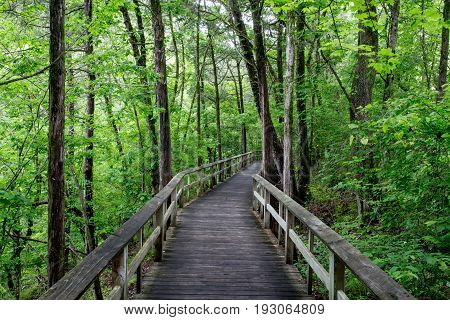 Boardwalk leading throught the forest on a rainy day.