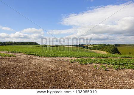 Scenic Potato Field