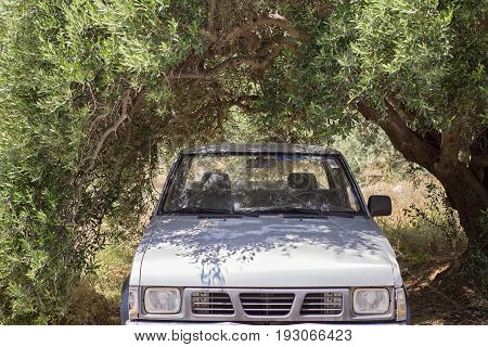 old rusty car standing in the shade of olive tree