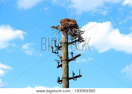 Old wooden pole power-telephone, bird nest on the top