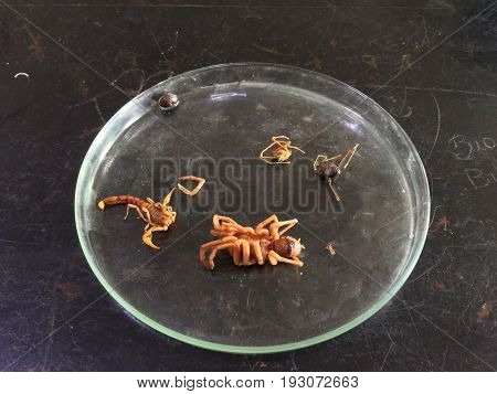 Biology, arthropods, animals with bodies of strange shapes and varied colors