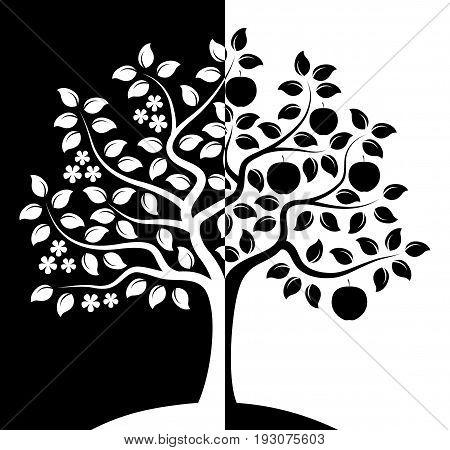 vector apple tree in two seasons isolated on black and white background