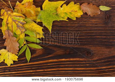 Colorful autumn foliage on wooden table from above. Fall background.