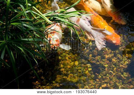 Fish sharing the warmth of the sun