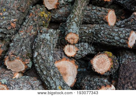 Heap Of Firewood. The Sawn Tree. Pieces Of A Tree.
