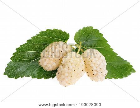 Mulberry fruit with leaves isolated on white background. White mulberry