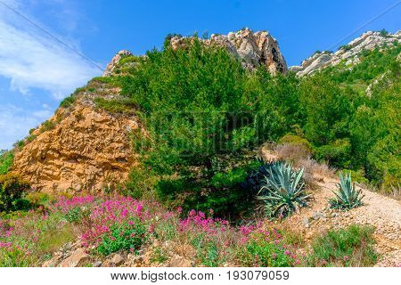 Vegetation on the Estaque mountain range on the