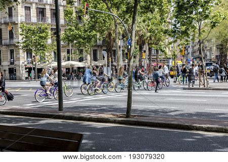 Bicyclists on colorful bicycles crossing pedestrian crosswalk in Barcelona