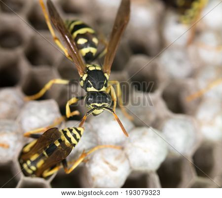 wasp on hives. A close. A photo