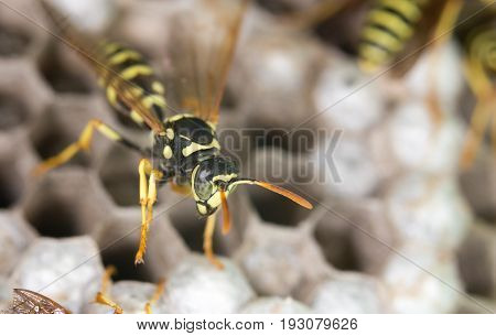 wasp on hives. A close . A photo