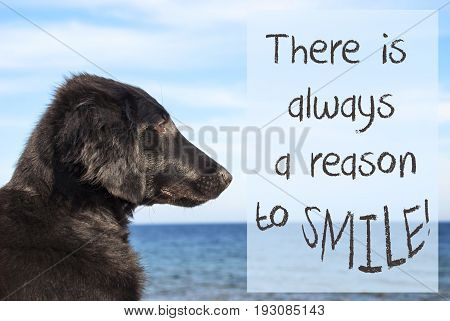 English Quote There Is Always A Reason To Smile. Flat Coated Retriever Dog Infront Of Ocean. Water In The Background
