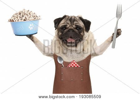 smiling pug dog wearing leather barbecue apron holding up blue food bowl with kibble and fork isolated on white background