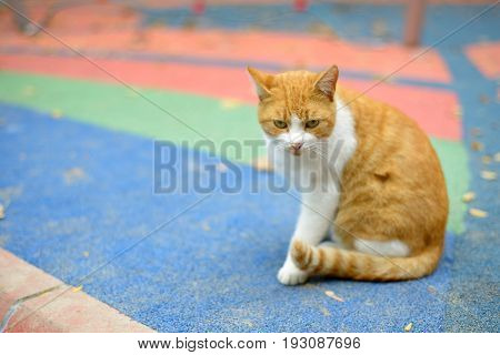 Homeless cat sittin on colorful ground in a park
