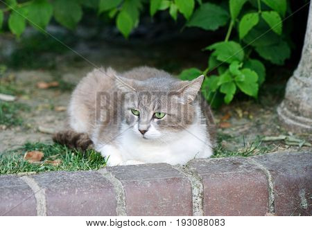 Homeless cat sittin on a ground in a park
