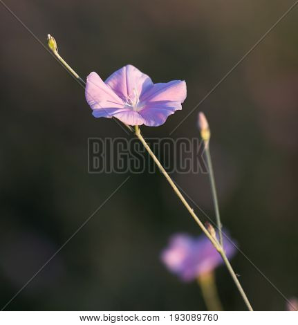A blue flowers in nature . A photo