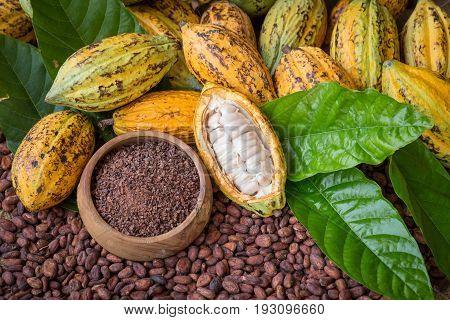 Ripe Cocoa Pod And Nibs, Cocoa Beans Setup Background