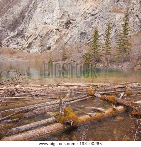 Landscape of Grassi Lake with Deadwood in the foreground Kananaskis Alberta Canada.