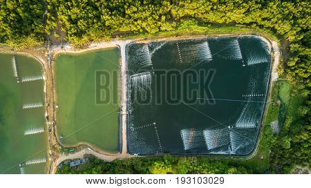 Shrimp farms aerial top view in the Phang Nga bay area, Thailand
