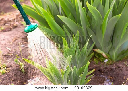 Irrigation Of Garden Plants, Irrigation With Water,