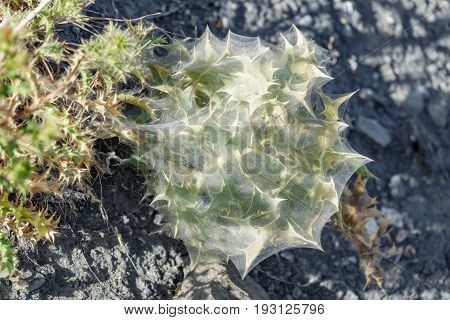 Closeup detailed view of Cactus surrounded with spiderweb