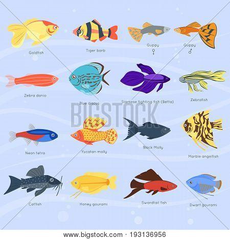 Exotic tropical fish different colors underwater ocean species aquatic nature flat isolated vector illustration. Decorative wildlife cartoon fauna aquarium water marine life.