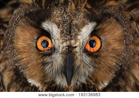 a owl portrait on a black background