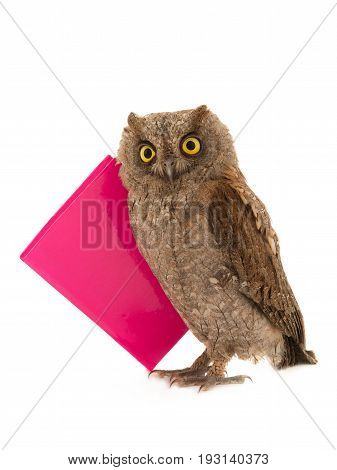 Wise owl with book isolated on a white background