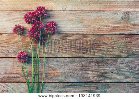 wild flowers of Allium on a wooden vintage background with space for text