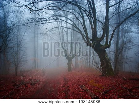 Gloomy misty country road in autumn forest. Shallow depth of field