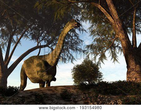 Antarctosaurus dinosaur walking among tamaris trees - 3D render
