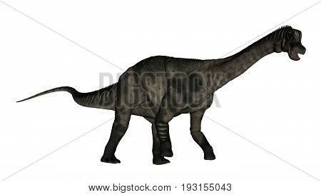 Antarctosaurus dinosaur walking and roaring isolated in white background - 3D render