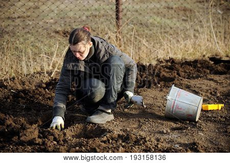 A young girl is planting potatoes on her plot of land in a village in early spring