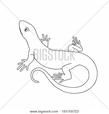 Isolated black outline monochrome lizard on white background. Curve lines. Page of coloring book