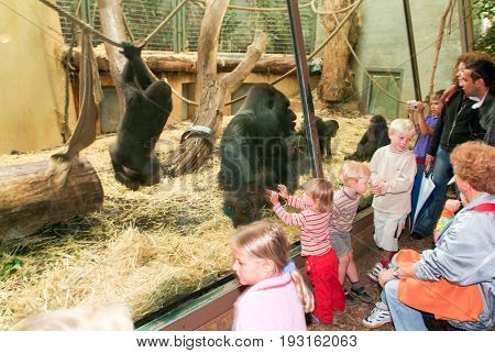 People Observing Gorillas In The Zoo Zurich On Switzerland