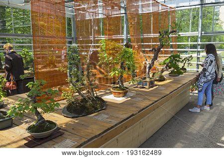 Exhibition Of Bonsai.