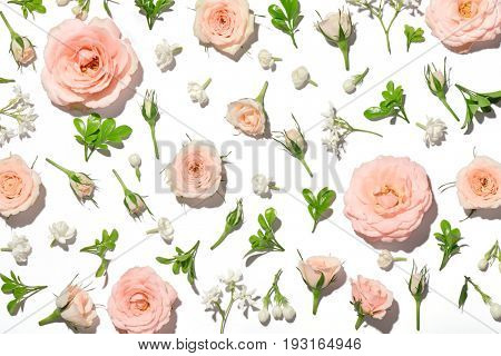 pink rose petal on white background