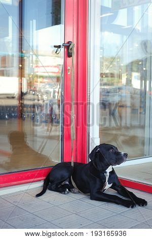 Tethered Dog At The Supermarket