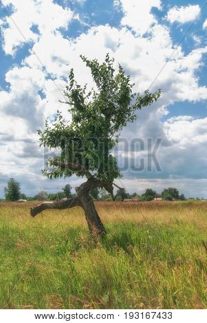 Curved branched tree looking like a running man.