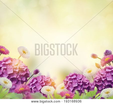 Floral background with  hydrangeas and daisies