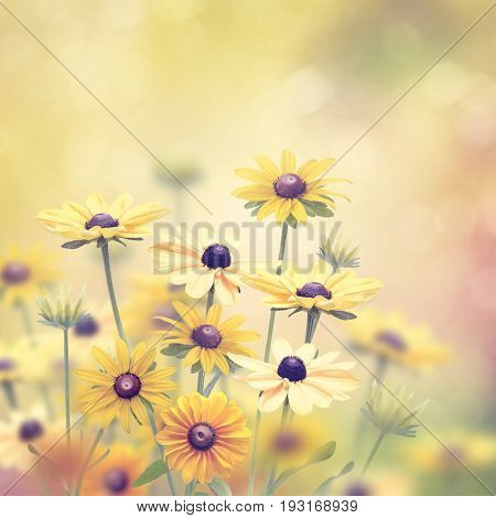 Yellow daisy flowers with  sunlight