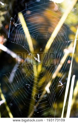 Over a small pit with a puddle among the grass, the spider wove a cobweb and not even one. In it you can see his dinner which is long over.