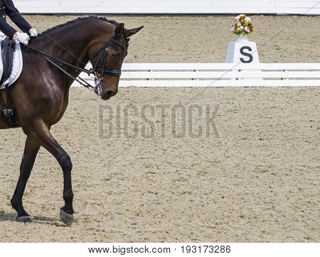 Dressage horse and rider. Bay horse portrait during dressage competition. Advanced dressage test. Copy space for your text.