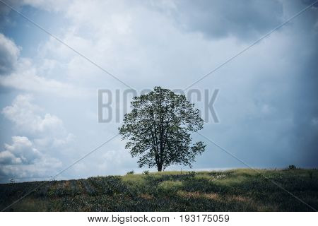 Only one tree stand among nature and blue sky background