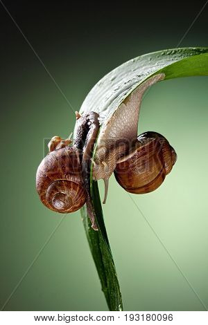 snail family .Little snail mother and father snail.Analogy.Concept of family.Ing and yan.Concept Balance