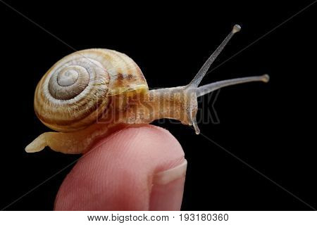 Little Snail sitting on a finger.Macro photography of snail