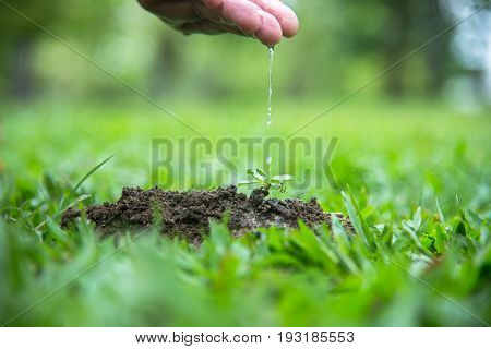 Hands of a farmer woman watering young green plants and nurturing baby plant. World Environment and Save Environment.