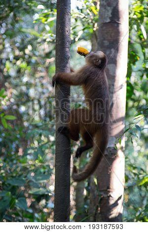 Monkey(s) at the Monkey Islands, Tambopata, Peru