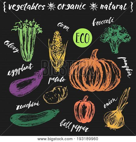 Ink sketch of vegetables with hand lettering names. Organic farm product design. Celery corn broccoli eggplant potato zucchini bell pepper onion pumpkin.